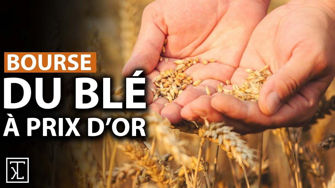Le blé indispensable pour notre vie, vaudra-t-il bientôt plus que l'or ?
